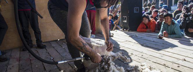 17 esquiladores dieron vida a la Primera Competencia de Esquila Rápida Speed Shear y de Calidad en Cerro Sombrero