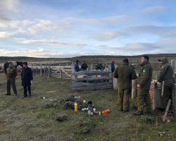 Asociación de Ganaderos de Tierra del Fuego reclama que la Justicia se ponga del lado de las víctimas y no de los delincuentes, por casos de abigeato
