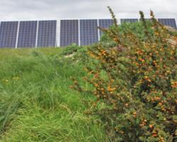 Las energías renovables permiten hoy que se agilicen los procesos ganaderos