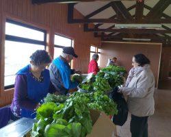 Productores de Tierra del Fuego encantaron con hortalizas frescas en primera feria de la temporada